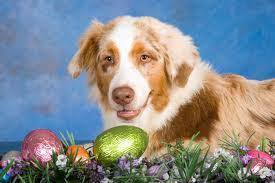 dog eggs