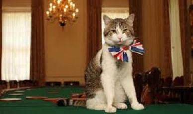 david cameron's cat