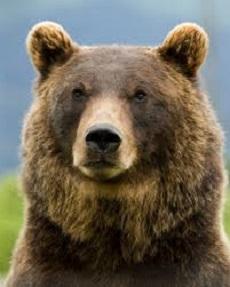 asylum-seeking-bear